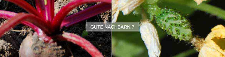 Online Gartenplaner Unterstüzt Sie Bei Der Erstellung Eines Gartenplans /  Gemüsebeet Plans