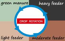 online garden planner patch planner crop rotation